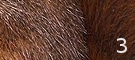 A qui appartient cette fourrure ou ces plumes/écailles ? Sans_e10