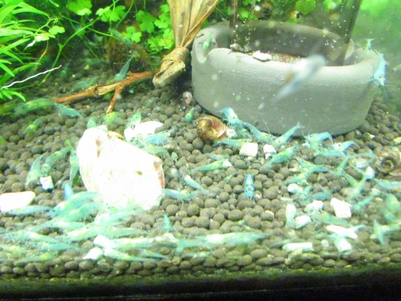 Rilli blue  X  sakura black  1ere version . 00110