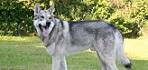 Wolfhunde