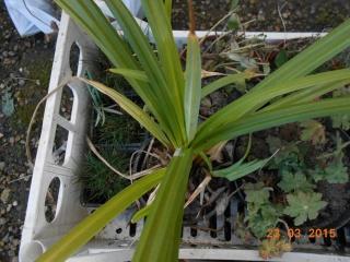 Troc aux plantes a Louhans  2015-047