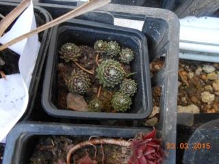 Troc aux plantes a Louhans  2015-051