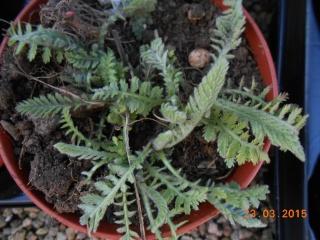 Troc aux plantes a Louhans  2015-055