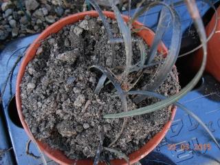Troc aux plantes a Louhans  2015-056