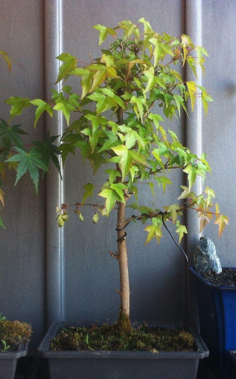 Consigli su piante Immagi10