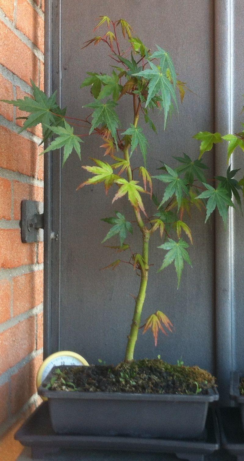 Consigli su piante Immagi11