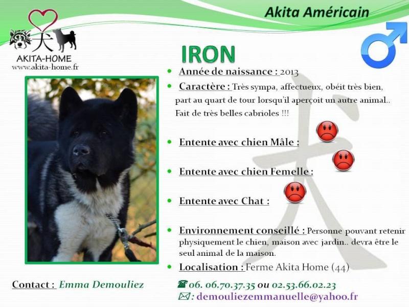 Iron Akita Américain  (m ) 2013   Sympa, affectueux et très obéissant ASSO44 10405610