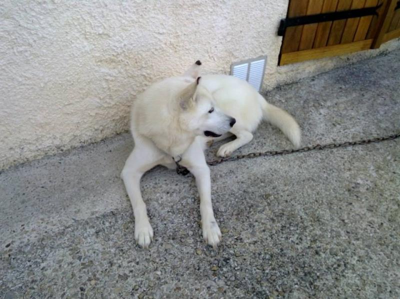Balto type Husky ok chiens chats enfants ASSO46 ADOPTE 10628510
