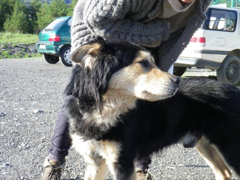 Kaïser, croisé chien finnois de laponie (m) REFU04 ADOPTE 11155013