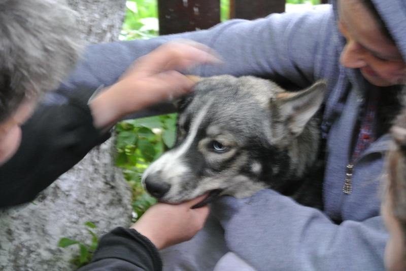 Sparky husky (m) 5 mois et demi, sauvetage Roumanie ADOPTE 11157511