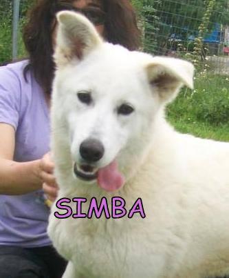 Simba x husky (f) 28 06/2014 REFU11  ADOPTEE 11159410