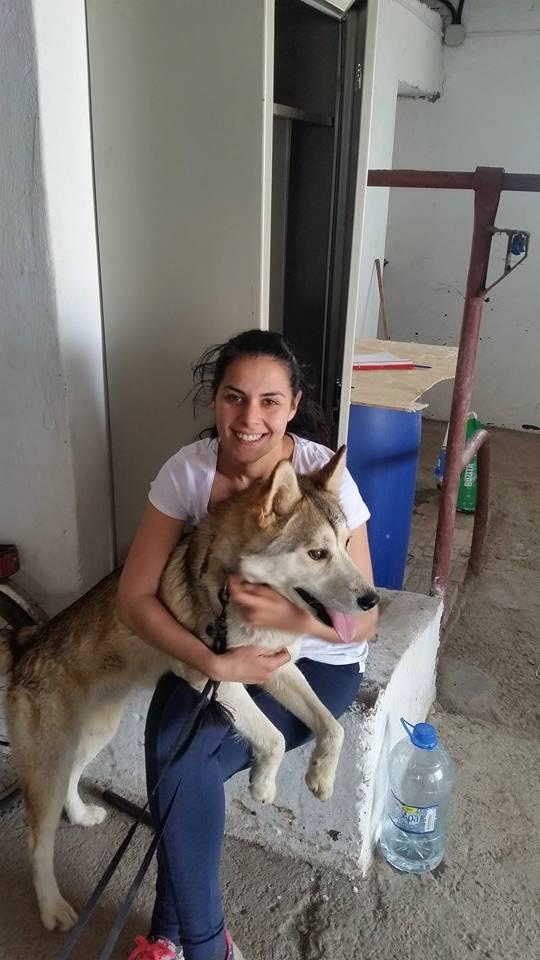 Biko, Husky 2/3 ans gentil ok congénère ROUMANIE ASSO Suisse ADOPTE 11164610
