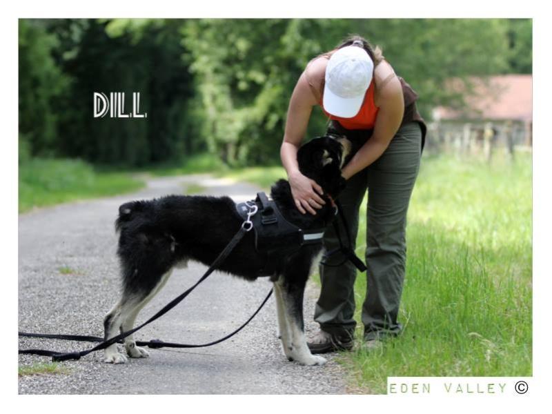 DILL X HUSKY  né en 2007  (m) EDEN VALLEY ASSO39 - Page 3 11255710