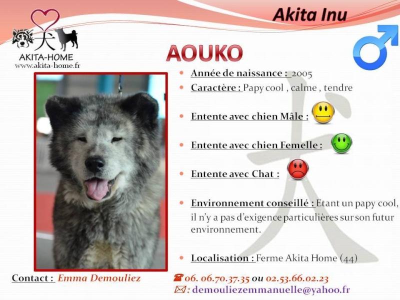 AOUKO Akita inu mâle, 03/ 2005 pas de chats asso 44 15350110