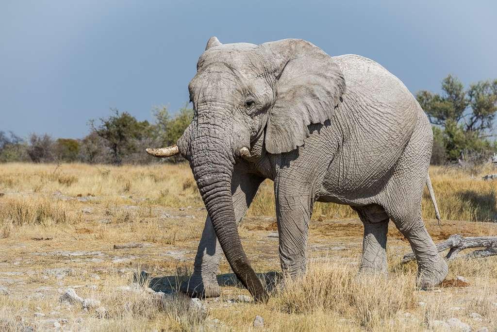 Attitudes éléphantesques _dsc2110