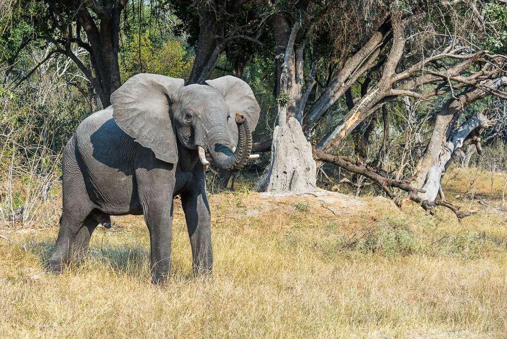 Attitudes éléphantesques _dsc3010