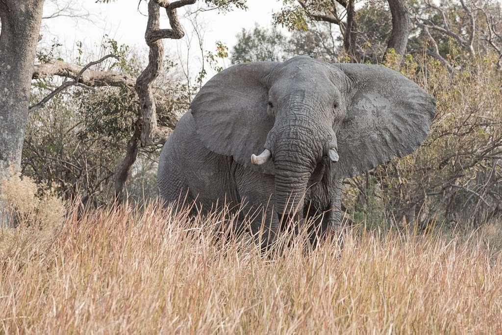 Attitudes éléphantesques _dsc3310