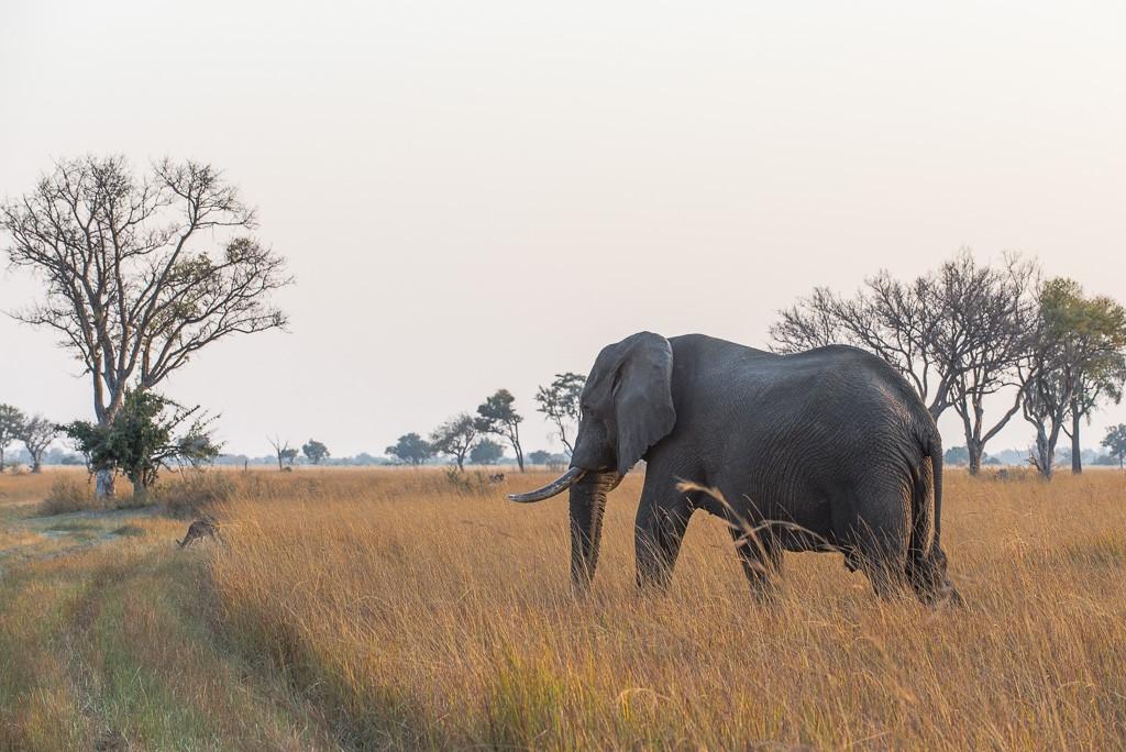 Attitudes éléphantesques _dsc3311