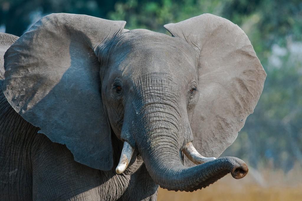 Attitudes éléphantesques _dsc7210