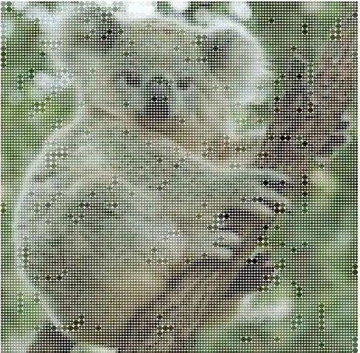 Sur le grill - Page 6 Koala10