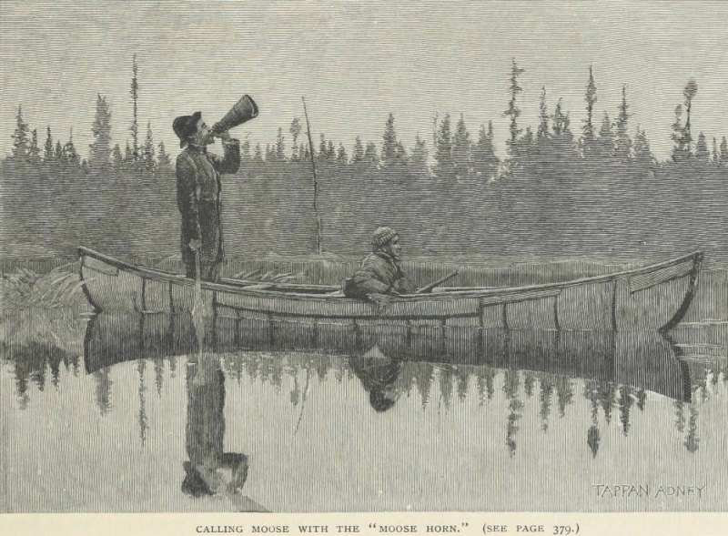 L'élan et les pratiques de chasse  Elan_110