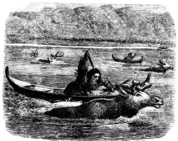 L'élan et les pratiques de chasse  Elan_210