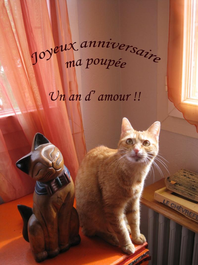 Les anniversaires de nos minous - Page 3 Img_7111