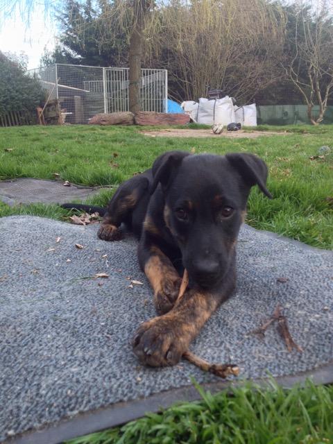 [Clos]Visite post adoption (chien) à Morlaix pour Jun Jun310