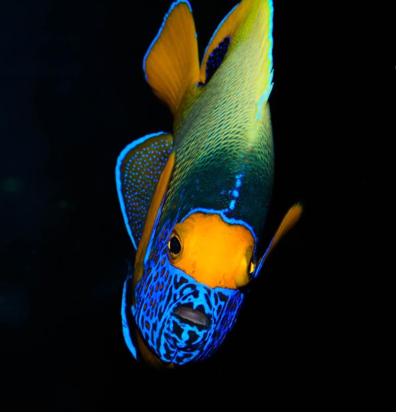 Aquarium Photography - My Tank 004-210