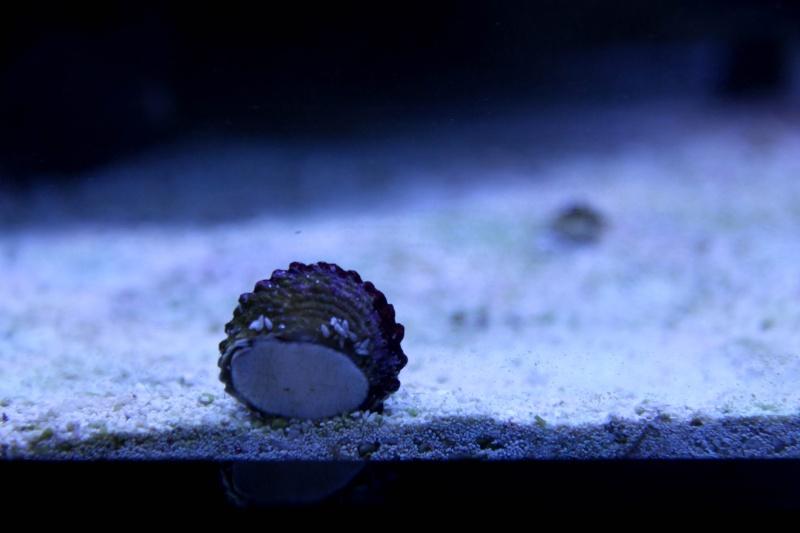 Aquarium Photography - My Tank 00610