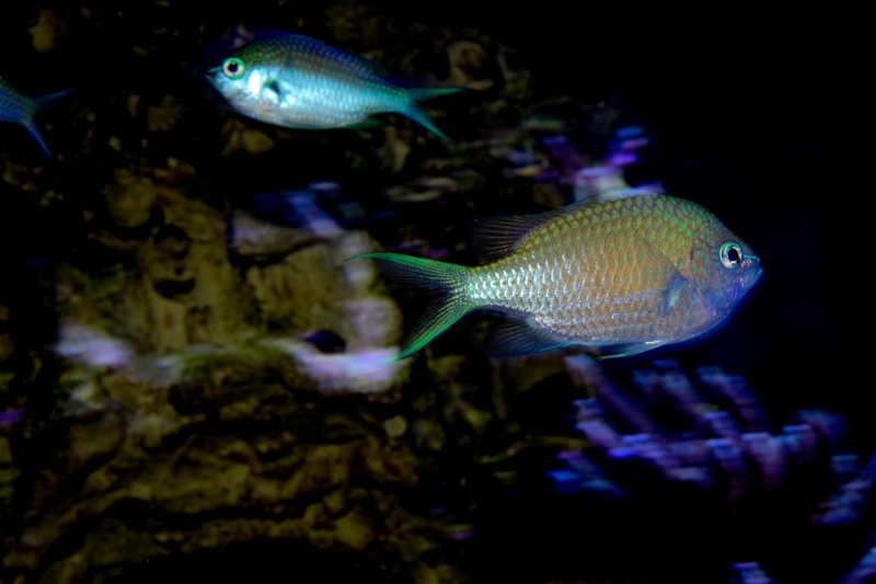 Aquarium Photography - My Tank 01310