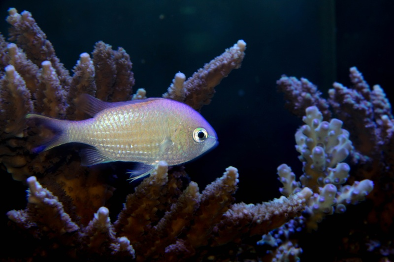 Aquarium Photography - My Tank 03310