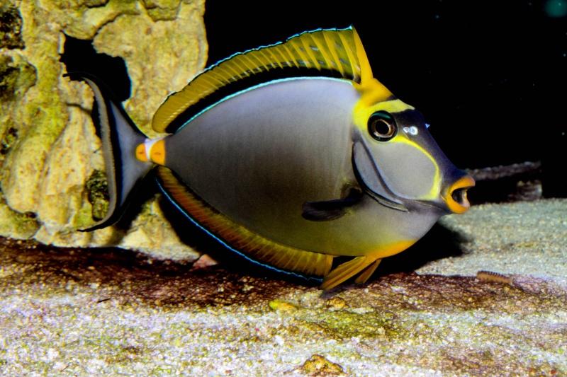 Aquarium Photography - My Tank 15710
