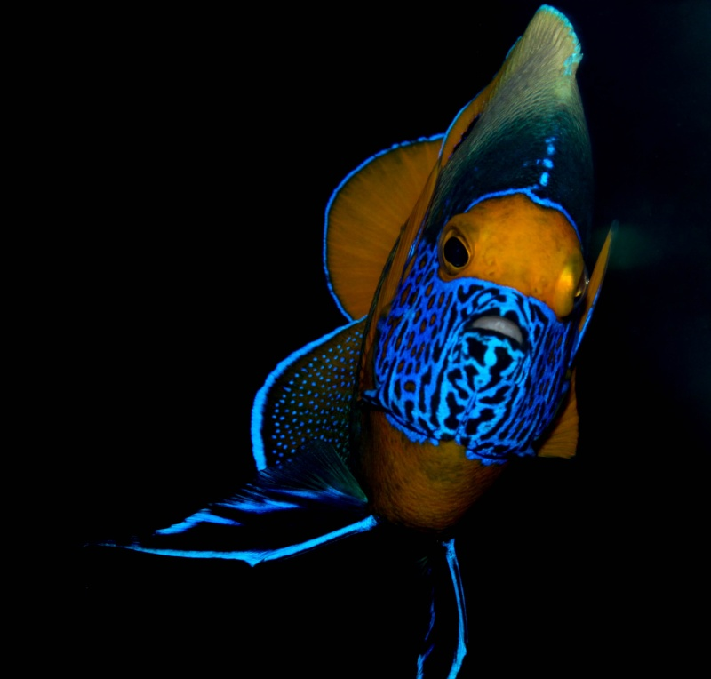 Aquarium Photography - My Tank 18810