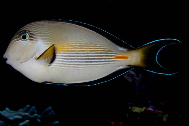 Aquarium Photography - My Tank 20310