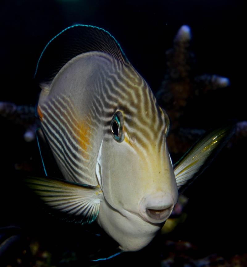 Aquarium Photography - My Tank 239-210