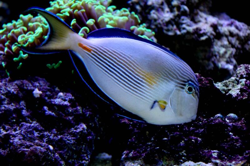 Aquarium Photography - My Tank 37110