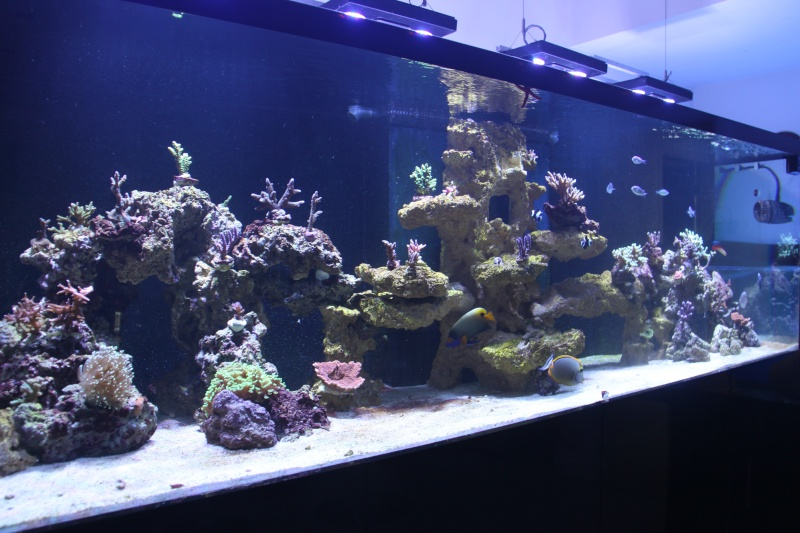 8ft Beast - The Corals 66110