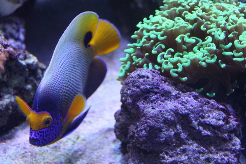 8ft Beast - The Corals 674_8010