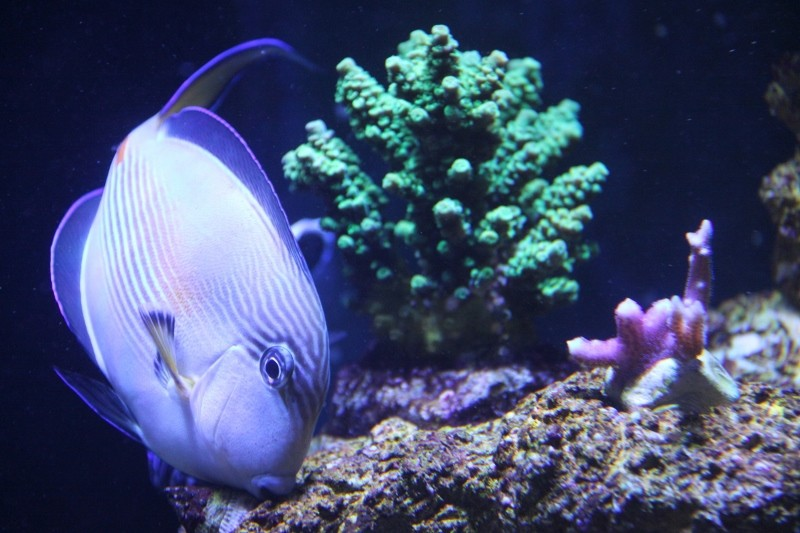8ft Beast - The Corals Img_2012