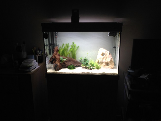 Lancement dans l'aquariophilie! NOUVELLES PHOTOS Page 3 Img_9113