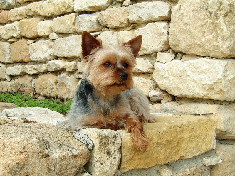 Fil sur les animaux domestiques (chiens, chats, oiseaux, etc.) Dh000010