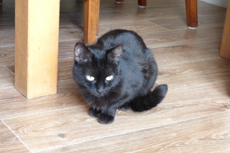 Jenga, femelle type européenne noire estimée née 15/10/2014 P1000920