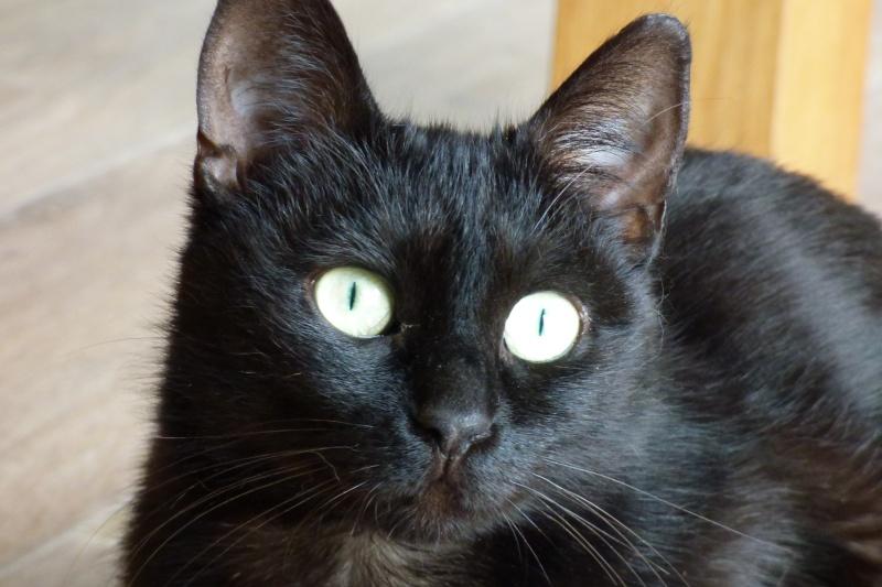 Jenga, femelle type européenne noire estimée née 15/10/2014 P1010011