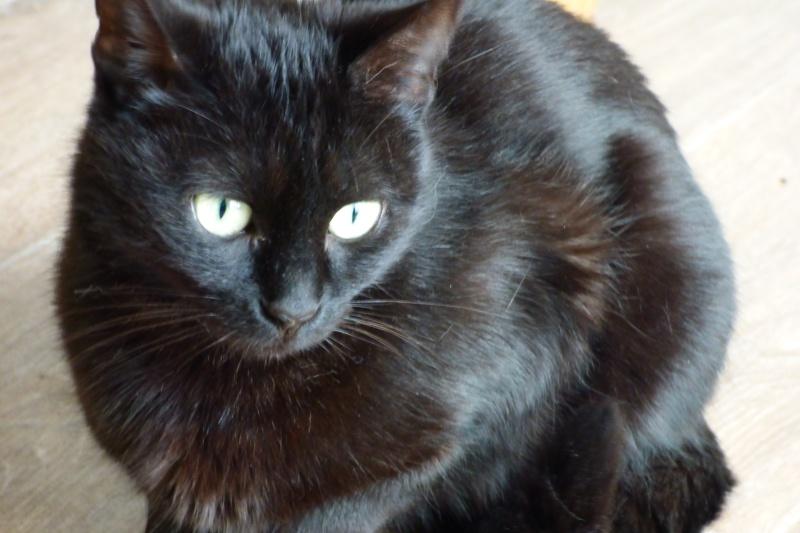 Jenga, femelle type européenne noire estimée née 15/10/2014 P1010012