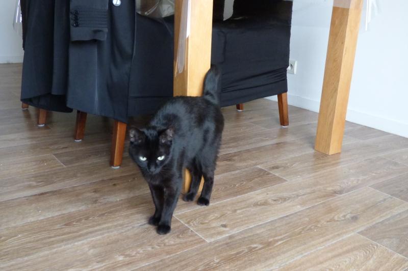Jenga, femelle type européenne noire estimée née 15/10/2014 P1010014