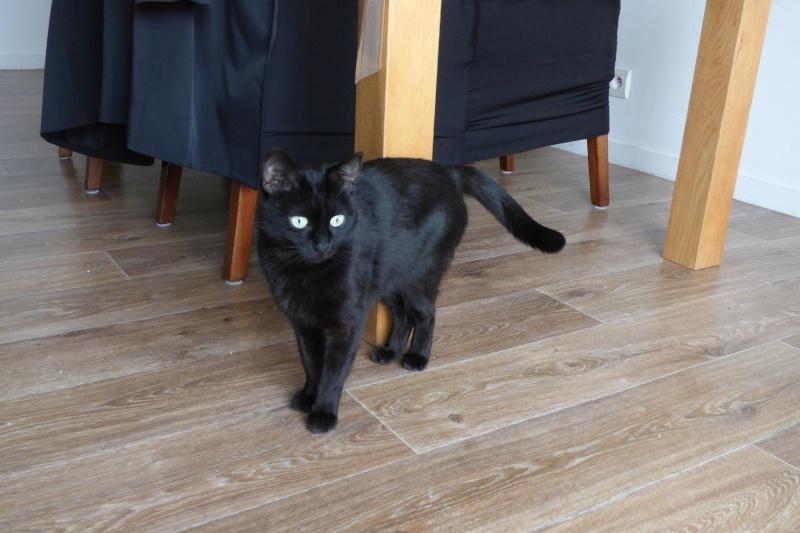 Jenga, femelle type européenne noire estimée née 15/10/2014 P1010015