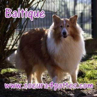 Baltique F. zibeline 9 ans (Coeur à 4 pattes 58) 10552610