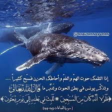 يونـــــــــــــس عليه السلام Images34