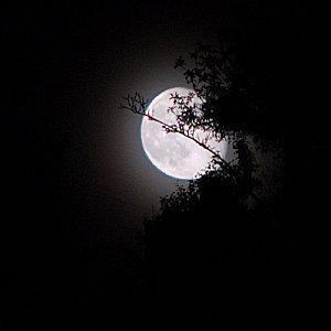 La prophétie! Lune10