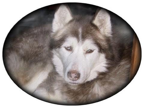 mon loup Falcko11